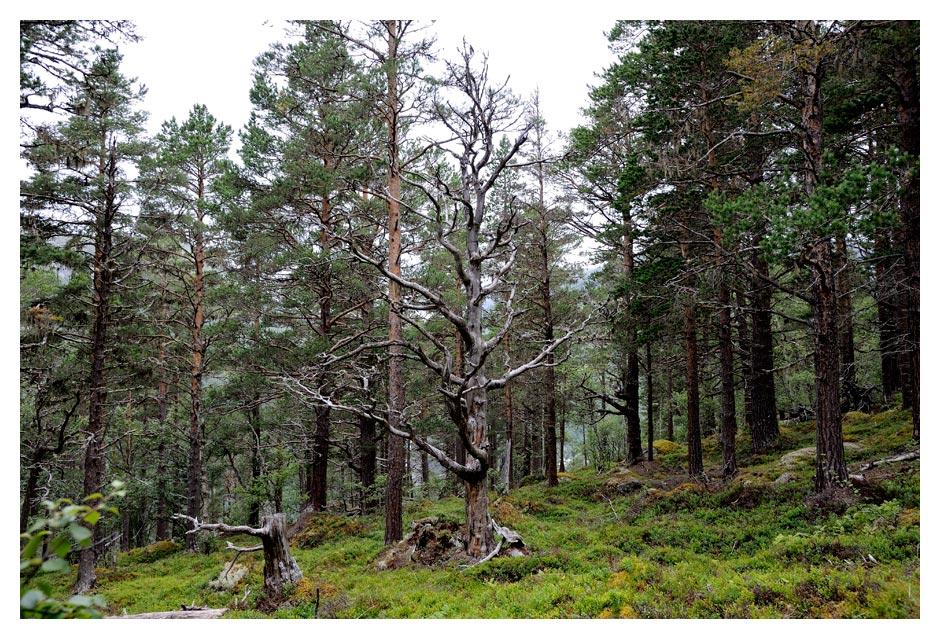 Norwegen16_W_719