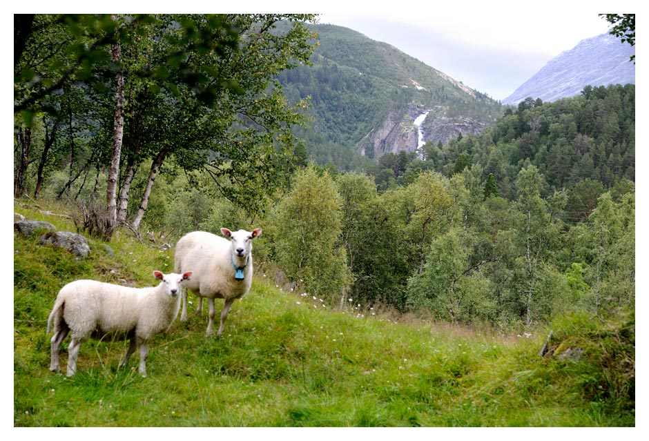 Norwegen16_W_740